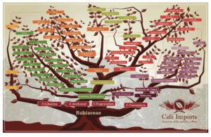 coffee-varietal-tree