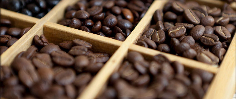 How to grow coffee in your backyard!