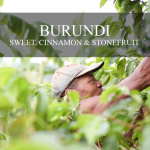 Mission Arabica Burundi Coffee
