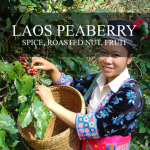Mission Arabica Laos Peaberry Coffee